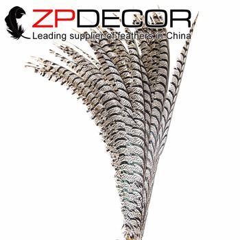 ZPDECOR Wholesale 36-40inch(90-100cm)10pieces/lot Dyed Natural Zebra Lady Amherst Pheasant Feathers for Carnival Show Decoration