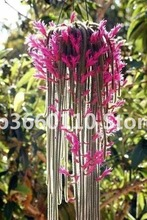 100 pcs Climbing plant Echinopsis Tubiflora Flowering Cactus bonsai Rare Flower Perennial Ornamental Mini Plant Succulent