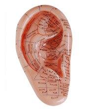 Английская версия иглоукалывания Уха earpins модель модель ушной применение модели уха акупунктура очки модель 17 см