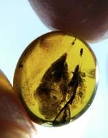Cretaceous rare unknown two item like shell burmite Untreated Myanmar Amber insect 100 million year lynx stone jewelry accessory
