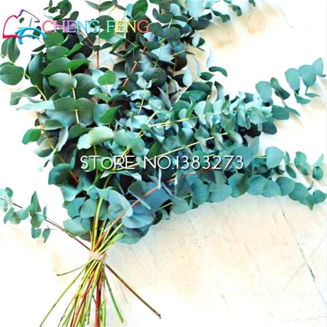 20 Pcs Bag Rare Rainbow Eucalyptus Bonsai Showy Tropical Tree For Garden Planting Watch
