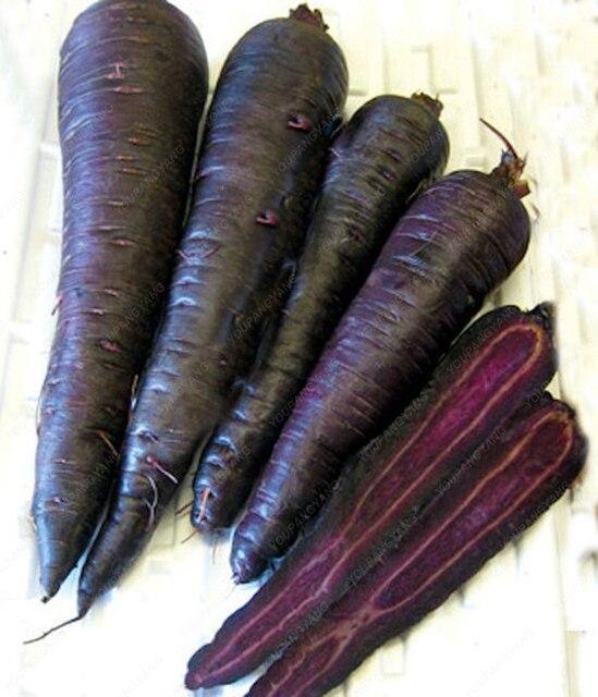 Nero carota frutta e Verdura Anti-aging ginseng nutriente piante Bonsai per la casa e giardino di 100 pz/borsa