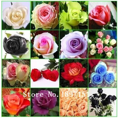 Big sale 100pcs/bag Beautiful Rainbow Rose Seeds Multi-colored Rose seeds Rose Flower Seeds bonsai plants for home garden