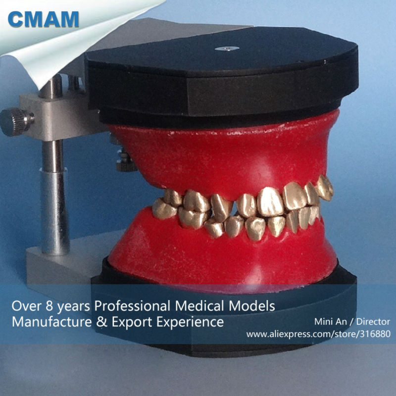 CMAM-DENTAL06 Dental Orthodontic Teeth Typodont Model 2016 dental orthodontics typodont teeth model half metal half ceramic brace typodont with arch wire