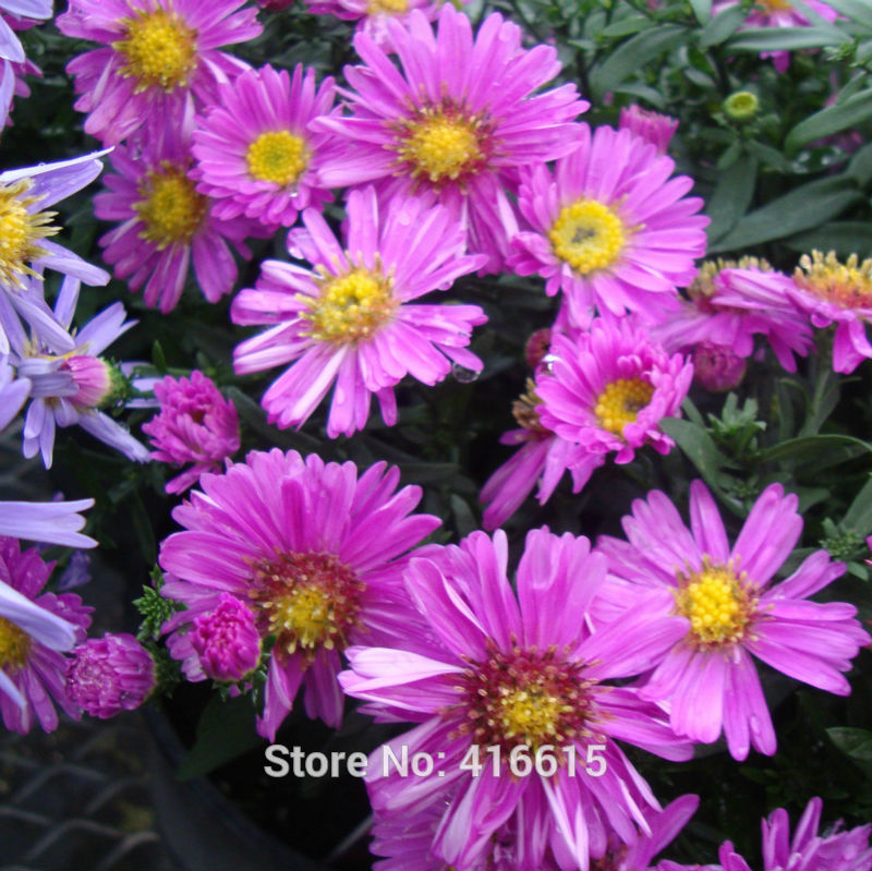 confronta i prezzi su flower garden drawings - shopping online ... - Giardino Fiorito Disegno