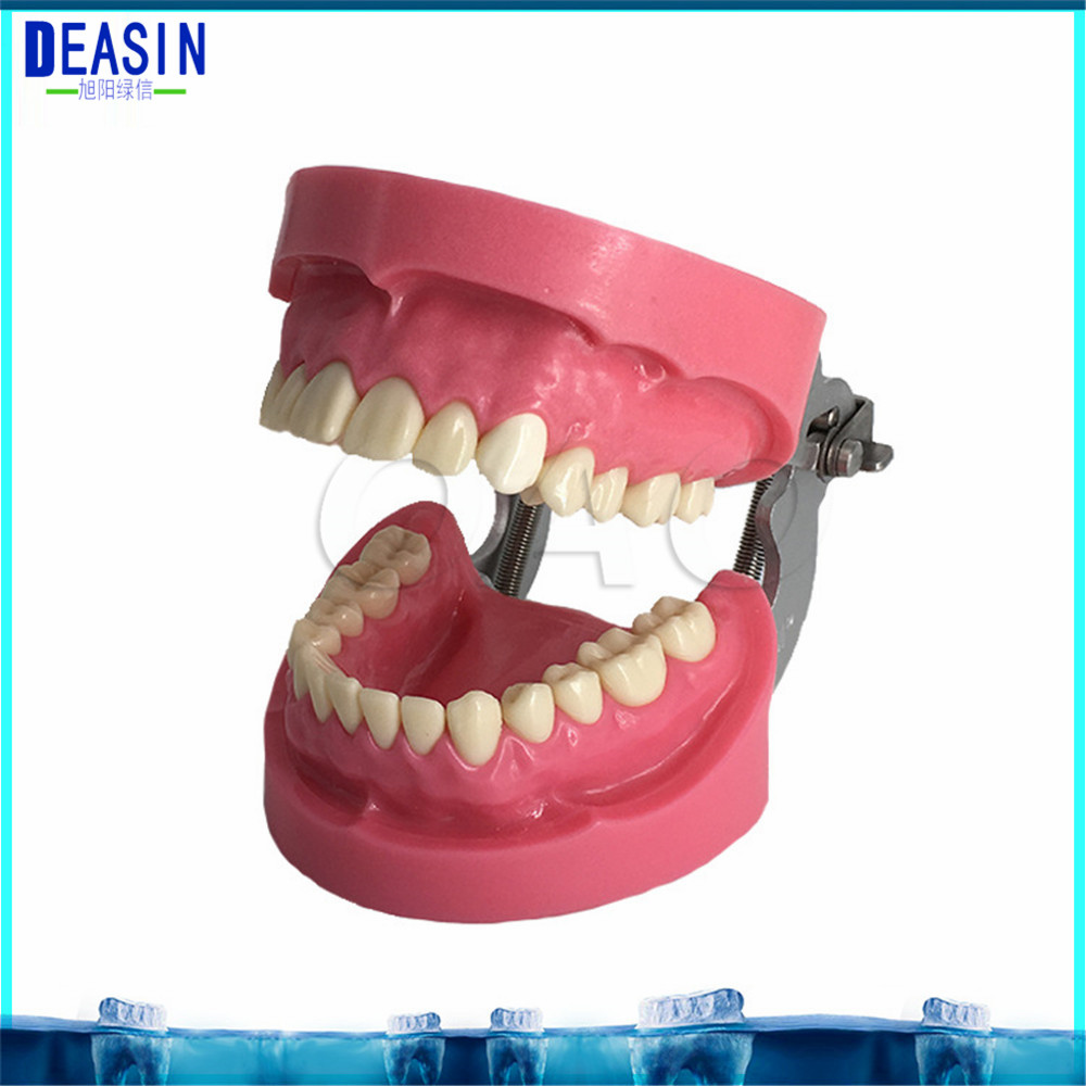 Removable Teeth dentist student learning model teaching teeth Model Caries Tooth Care Education