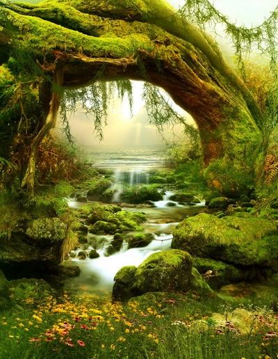 Original Forest Natural Scenic Background Vinyl