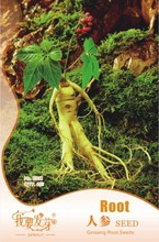 Original pack Chinese hardy Panax Ginseng Korea Ginseng seeds quality american ginseng, physical fitness, King of Herbs – 6 pcs