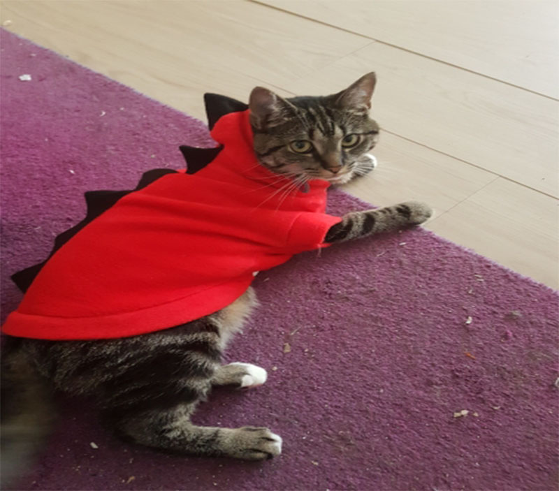 Dragon Halloween Costume For Cats