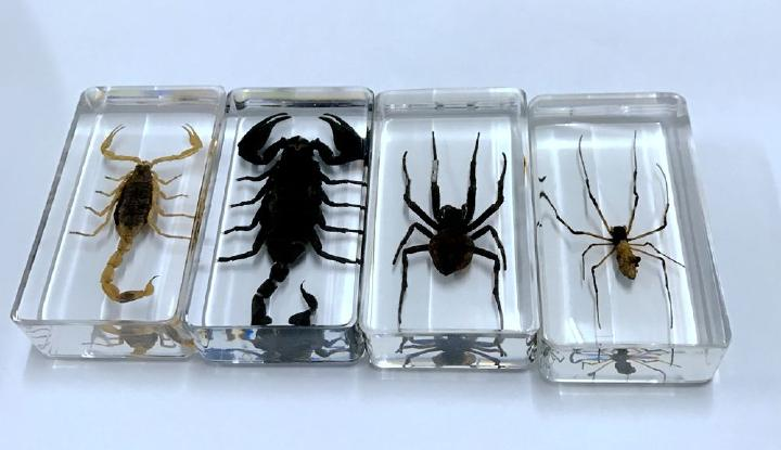 FREE SHIPPING 4 Pcs Vintage Scorpion Spider Specimen Insect Clear Cool Yqtdmy Specimen