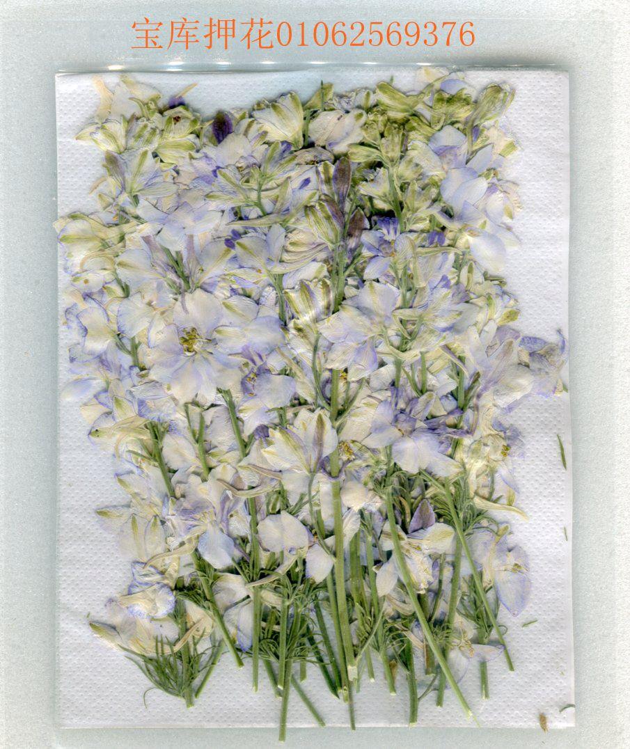 Free Shipment Press Flower Dried Flower Diy White Blue With Sticks