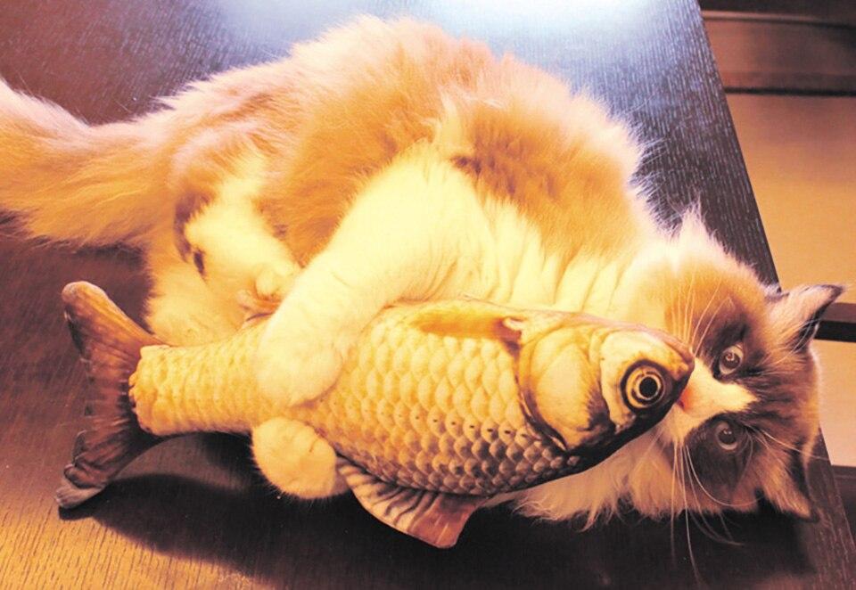 Peixe de Pelúcia 3D para Gatos