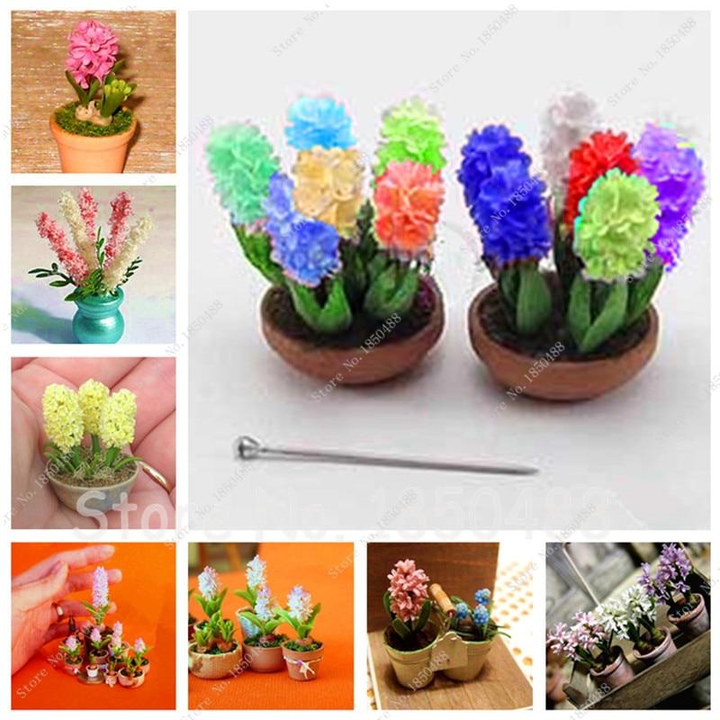 comparer les prix sur hyacinth pot shopping acheter prix bas hyacinth pot au prix d