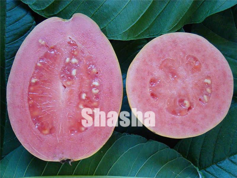 100 Pcs/bag Jambu Biji Bonsai Tropis Yang Lezat Buah Bonsai Non Transgenik Tanaman Bonsai Pohon Buah untuk Taman Rumah Tanaman