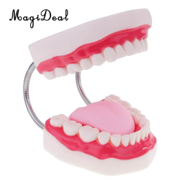 Online Shop Magideal Human Mouth Dental Teeth Tongue Model For