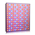 45W led grow light panel with Red Blue spectrum especial for Hydroponics grow tent commercial medical plants Veg fruit fruiting
