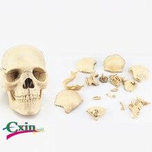 Моделирование Съемный 15 частей череп модель собранная головоломка Голова Череп основной цвет череп модель обучения