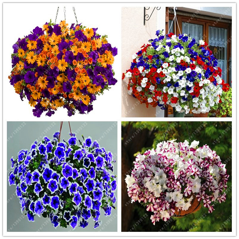 100pcs hanging petunia seeds melissa original flower seeds perennial flower..