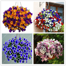Buy  ds buy-direct-from-china  ornamental-plant  online