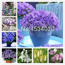 200 Pcs Lily Of The Valley Flower Bonsai, Bell Orchid Bonsai plants, Rich Aroma, Multi-Colored Orchids Campanula Bonsai Flower(China)