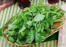 400 Pcs Cilantro Herb Seeds Green Healthiy Herb High Yield Fruitful Vegetable  Garden Bonsai Plant
