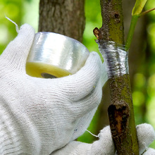 2/3/4/5/6 см самоклеящаяся сельскохозяйственные фруктовые бинт для подвязки деревьев лента пересадочная пластиковая прозрачная стретч-пленка для прививки для садовых инструментов
