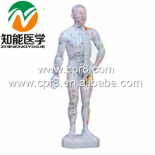 BIX-Y1011 Body Acupuncture Main Model (In Chinese)(26CM) WBW336