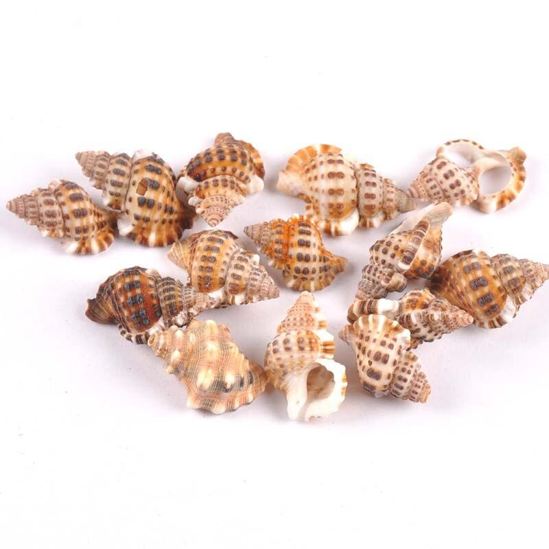 20-30mm Natural Spiral SeaShell Scrapbook Craft For Glass Bottle Decoration DIY Handmade 20pcs TRS0302