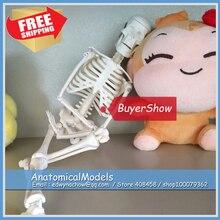 ED-SKELETON12-T1 Simple Study Mini 45cm Human Skeleton Model,  Medical Science Educational Teaching Anatomical Models