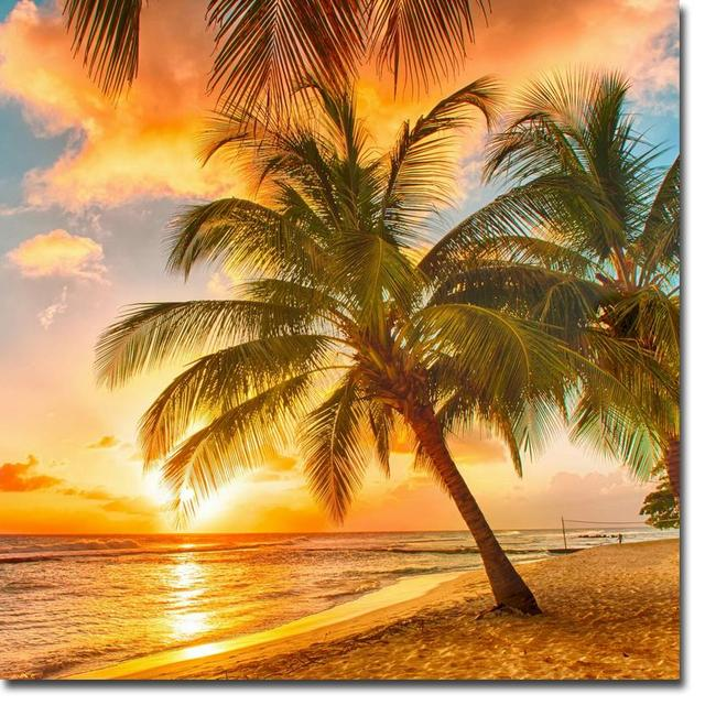 aliexpress com buy nicoleshenting sunset tropical beach ocean sea art silk fabric poster print 24x24 32x32 plam tree landscape pictures 010 from