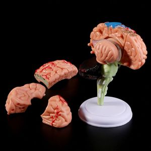 Image 2 - 4D Disassembled Anatomical Human Brain Model Anatomy Medical Teaching Tool Statues Sculptures Medical School Use