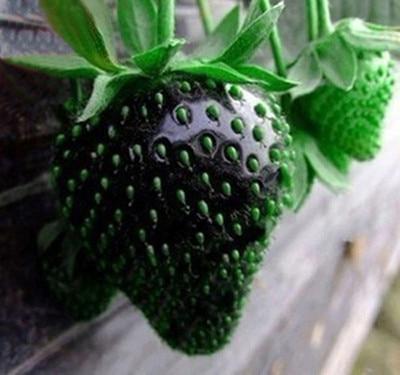 200pcs New Cultivated Black Strawberry Fruit Seeds Vegetables Non-GMO Bonsai Pot DIY Home Garden Plants