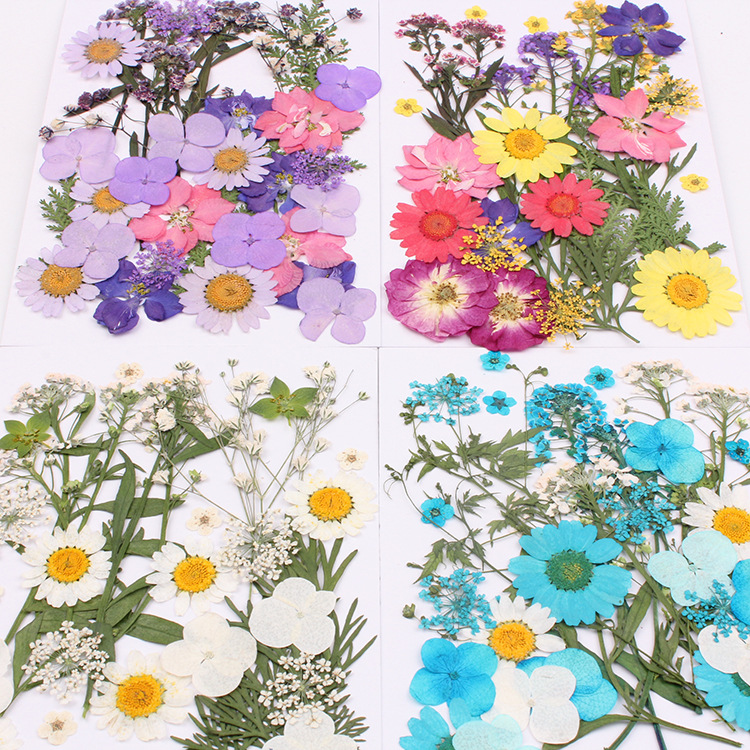 Natural Dried Flowers combination DIY Pressed Herbarium Flower Decorative Crafts filler jewelry making Handmade material package