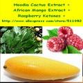 300 grama de Extrato de Hoodia Cactus + Extrato de Manga Africano + Complexo de Cetonas Framboesa Em Pó frete grátis