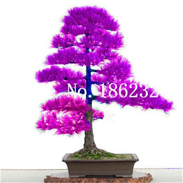 7BCEA8E50D988F3DA6C288F578034415
