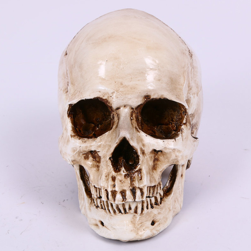 Collection Medical Model Lifesize 1:1 Craft Skull High Quality Human Head Halloween Party Home Decor Resin Replica