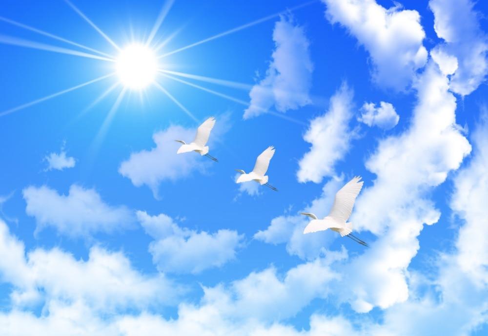 читателей картинки небо с облаками и голубями нас можете