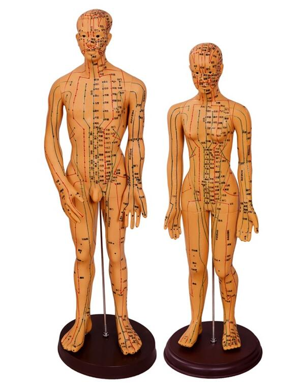 48cm Female Lettering Acupuncture Point Body Mannequin Of