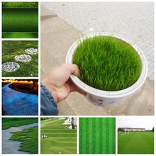 1000 Pcs Japanese Forest Grass lawn, Perennial Evergreen Lawn Bonsai plant Beautiful Garden Ornamental Potted Plant Easy to Grow