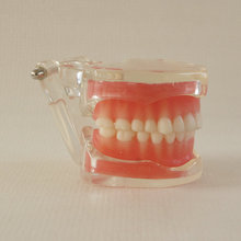 1pc Removable Teeth Model for dental training 28pcs teeth soft gum Adult Typodont education teeth Model for Dentist
