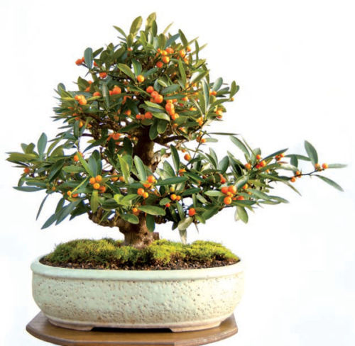 popular kumquat fruitbuy cheap kumquat fruit lots from china, Beautiful flower