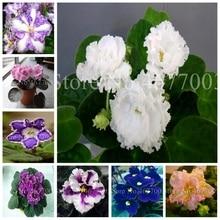 0a3bb2b7fe Toptan Satış violet flower pot Galerisi - Düşük Fiyattan satın alın ...