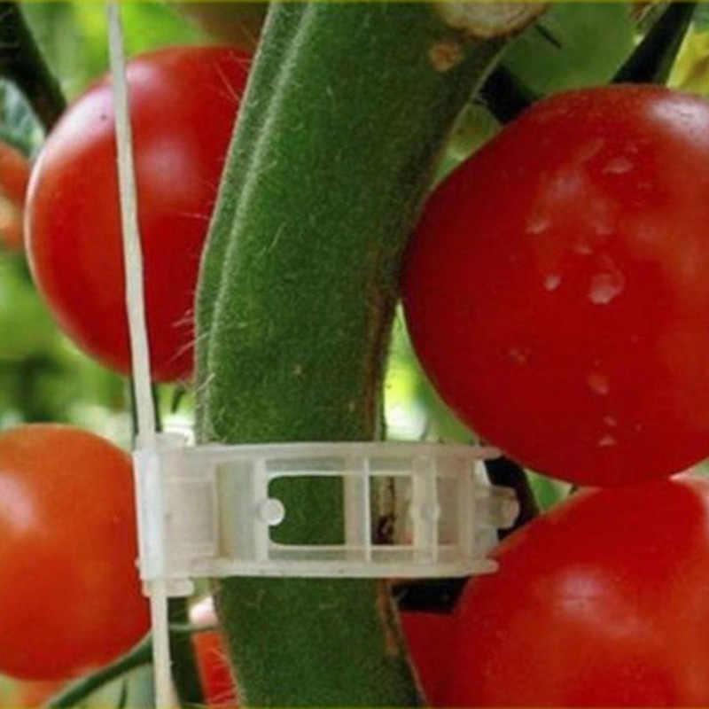 50 шт./компл. садовое растение поддержка стойка с зажимами держатель томатное растение поддержка стеллаж для хранения томатный крюк садовый Органайзер
