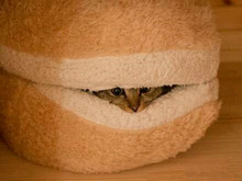 Hamburger Hill for the Cat