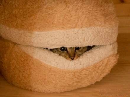Hamburger Hill for the Cat