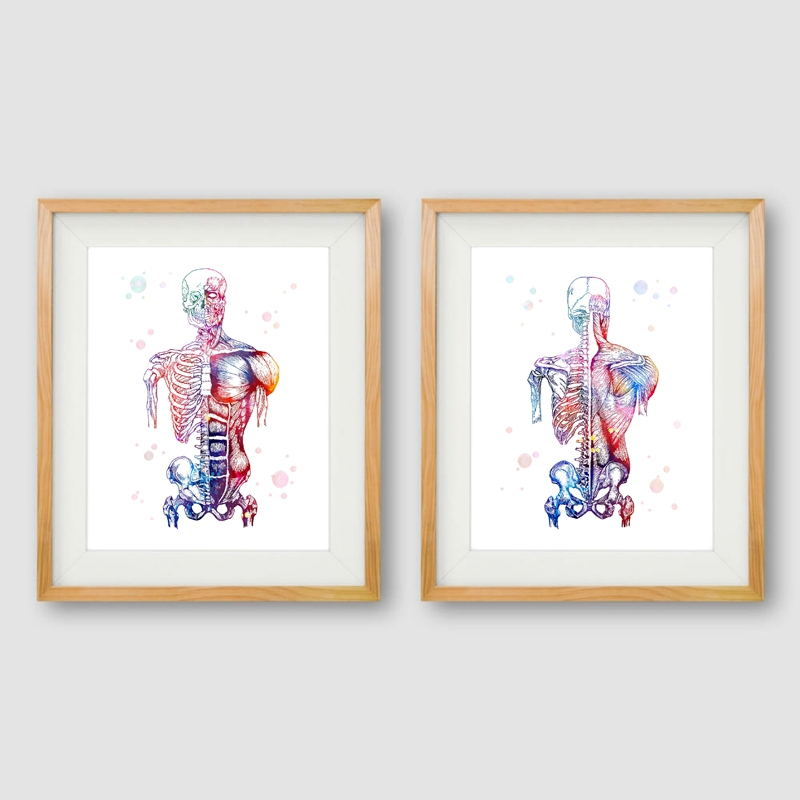 Watercolor Human Muscles Wall Art Print