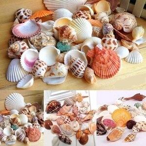 30Pcs/Bag Mix Aquarium Beach Nautical DIY Shells Mixed Bulk Approx 100g Sea Shell