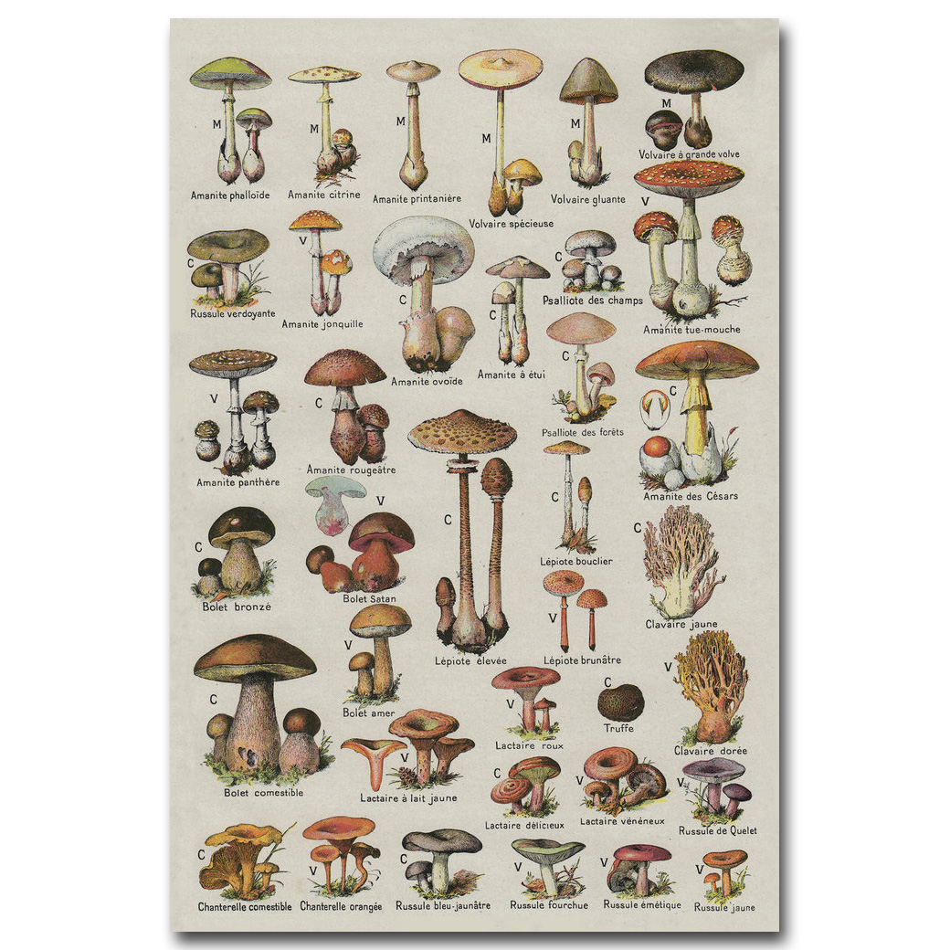 Mushrooms Poster Reviews - Online Shopping Mushrooms Poster ...