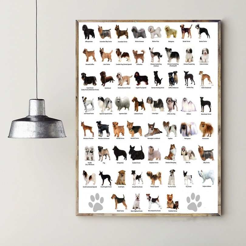 The Dog Different Dog Breeds Infographic Chart Art Canvas Poster Prints Home Wall Decor Painting 20x30 Inches image