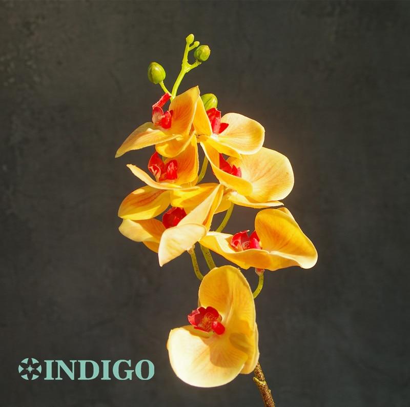 INDIGO- lilla Phalaenopsis orhidee tõeline puudutus orhidee liblikas - Pühad ja peod - Foto 4